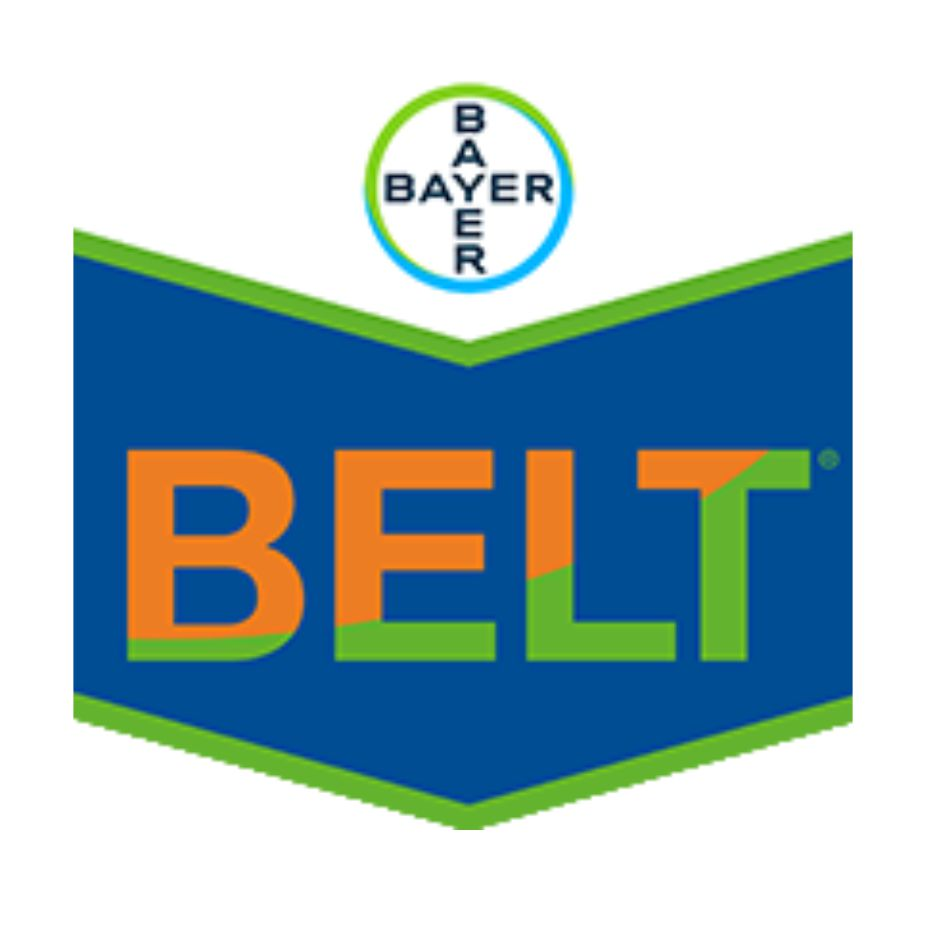 Bayer - Belt