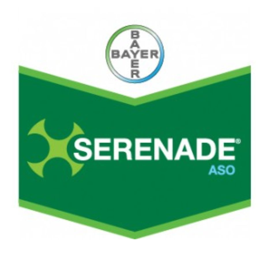 Bayer - Serenade