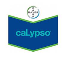 CALYPSO1