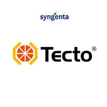 TECTO1